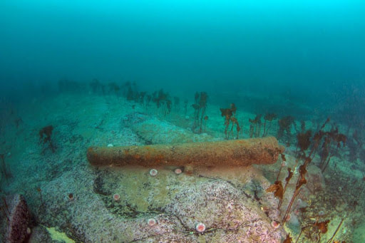 Cannon from the Queen of Sweden shipwreck, off the Knab, Lerwick. Photo: Donald Jefferies.