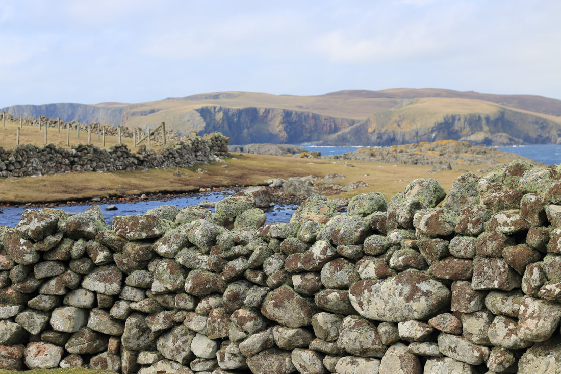 Stuuning coastal views as you walk to the Culswick Broch. Note the lichen on the wall.