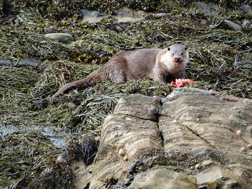 Fantastic photo of an otter near East-Gate.