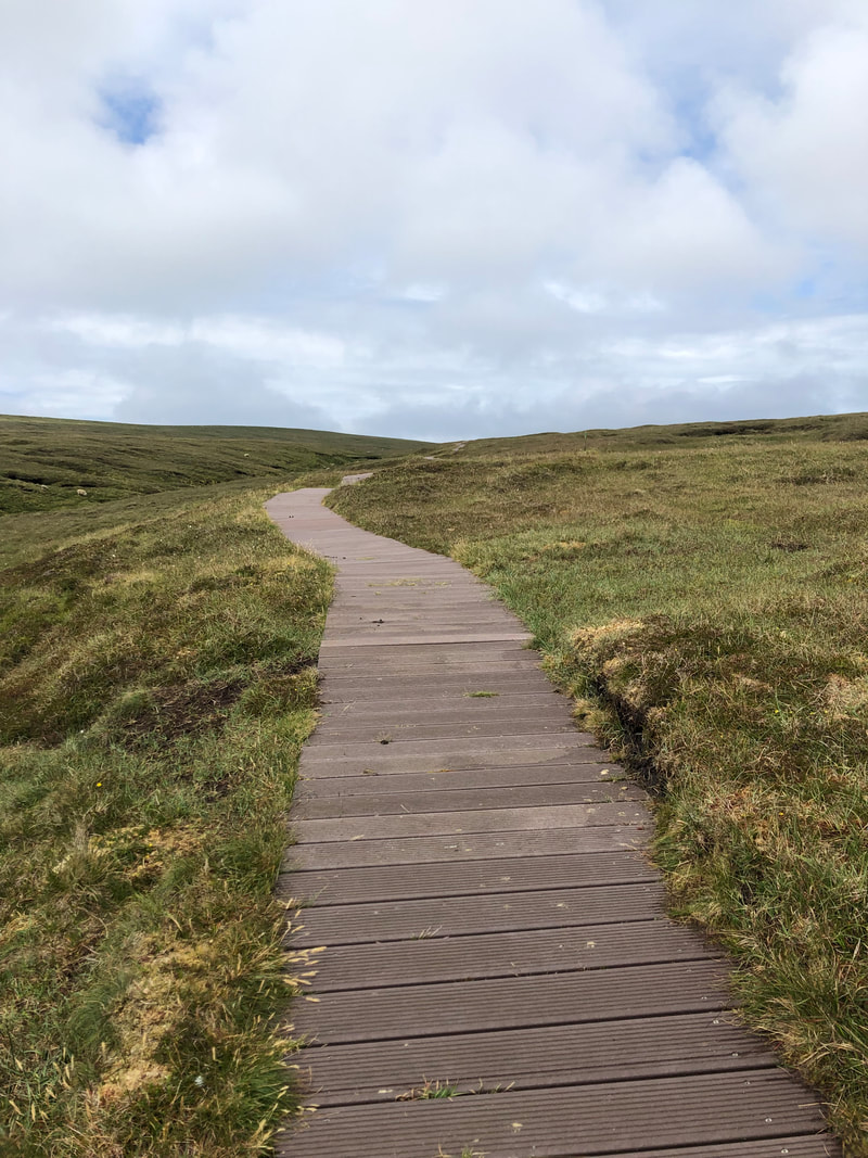 The walk to Hermaness follows a boardwalk for most of the way. Look out for native flowers and ferns along the way.