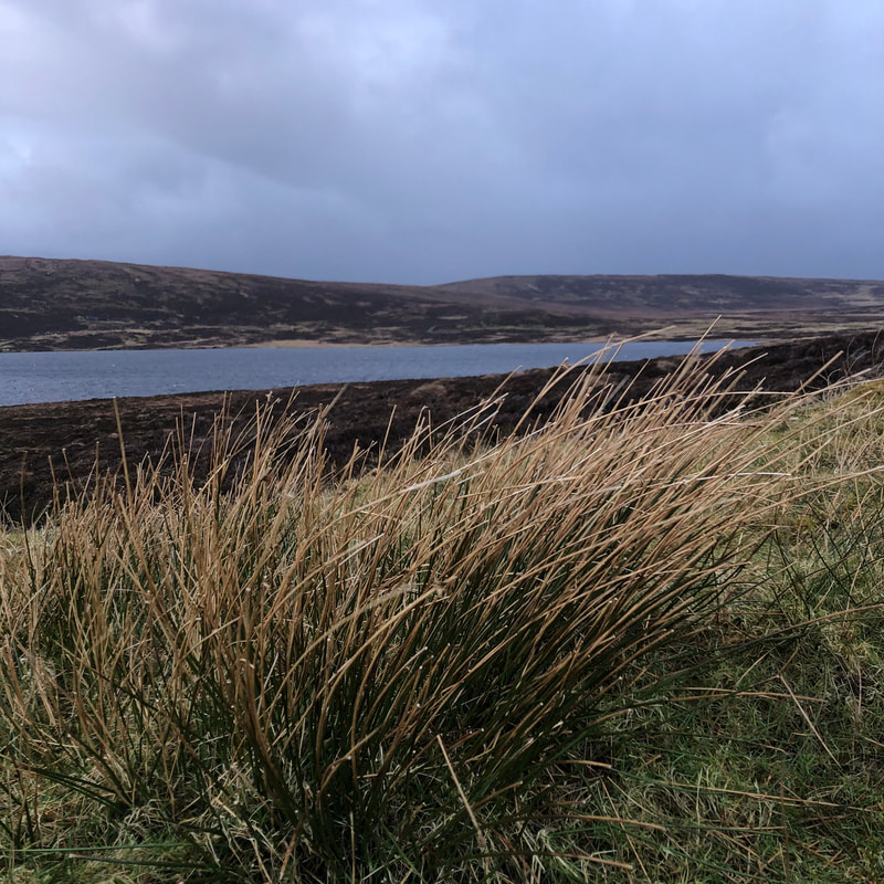 Finding frogspawn and solace in the Shetland hills.